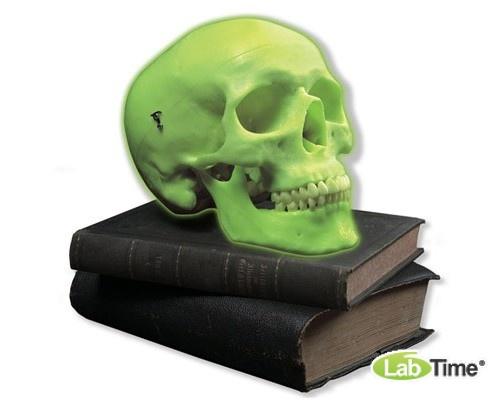 Модель неонового черепа