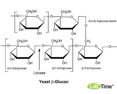 L2524 Литиказа, Arthrobacter luteus, лиофилизированый порошок, ≥2,000 ед/мг белка, Protein ≥20% by biuret,
