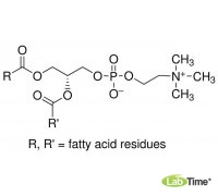 P3556 L-a-Фосфатидилхолин из яичного желтка, тип XVI-E, 99%, лиофилизированый порошок, 100 мг (Sigma)