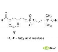 P3556 L-a-Фосфатидилхолин из яичного желтка, тип XVI-E, 99%, лиофилизированный порошок, 1 г (Sigma)