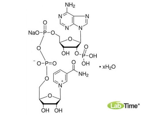 44126 бета-Никотинамид аденин динуклеотид фосфат натриевая соль, 250 мг (Alfa)