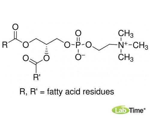 A0893.0250 Лецитин из яичного желтка, д/биохимии, мин. 60%, 250 г (AppliChem)