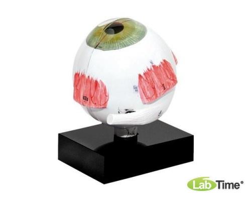 Модель глаза для ультразвуковой биометрии