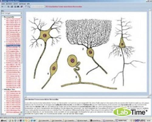 Программа «Нервная система и передача информации», часть I, на компакт-диске