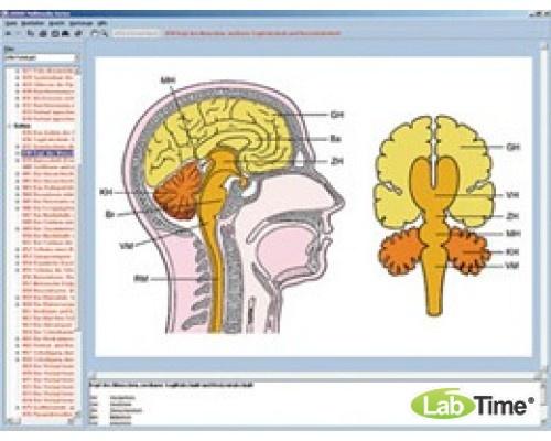 Программа «Нервная система и передача информации», часть II, на компакт-диске
