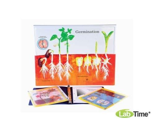 Набор для работы по теме «Прорастание растений»