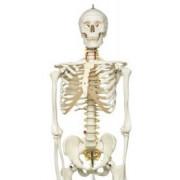Скелеты и кости
